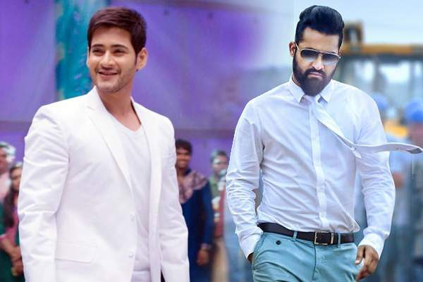 mahesh-in-the-place-of-ntr-in-a-crazy-combo