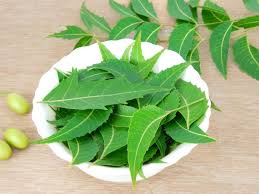 Neem leaves to check Dandruff: problems
