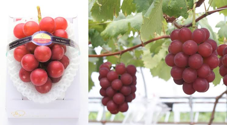 Ruby Roman: Grapes are very costly in world